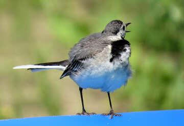 Bird screams №27408