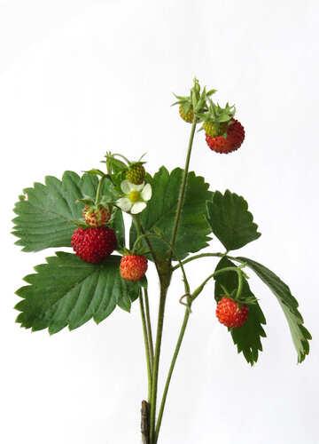 Strawberries on white background №27518