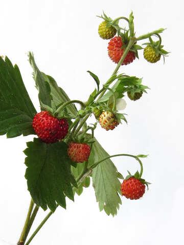 Strawberries on white background №27519