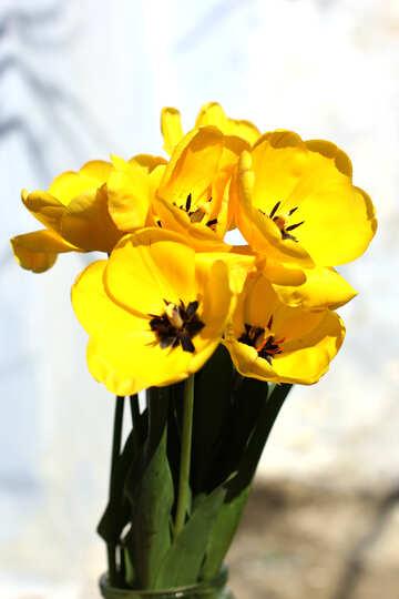 Simple bouquet №27456