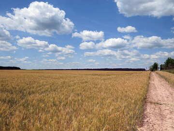 Grain harvest №27216