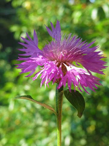 Beautiful flower №27059