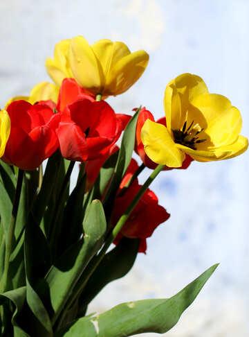 Garden flowers №27437