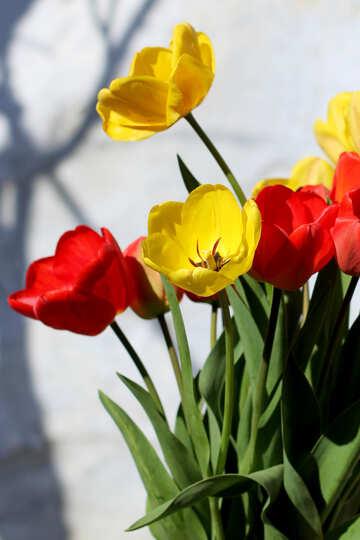 Simple flowers №27438