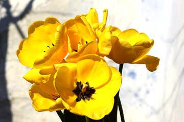 Flowers yellow №27458