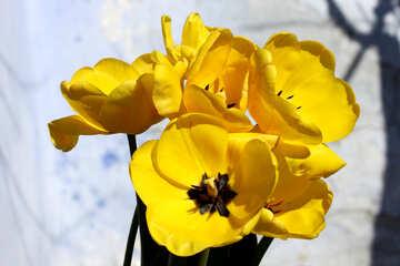 Yellow flowers №27459