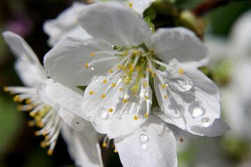 Pioggia di primavera №27071