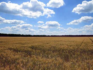 grain fields №27220