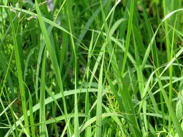 Green grass №27041