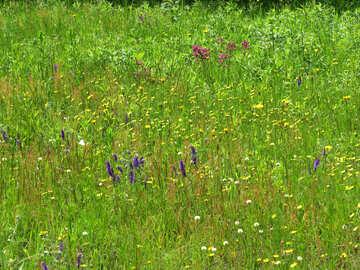 Blühenden Feld №27035