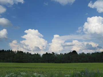 Grüne Wiesen und den blauen Himmel №27377