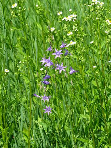 Wild flower №27028