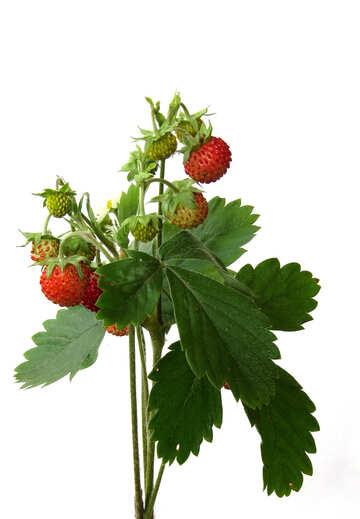 Drink strawberry №27512