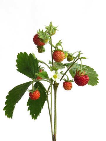 Strawberry №27510