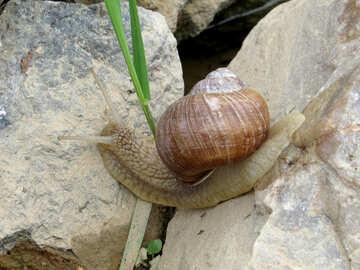 As the snail crawls №27480