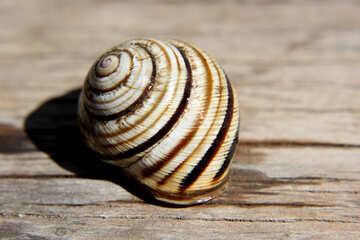 Snail shell №27112