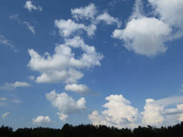 Blue sky above the forest №27374