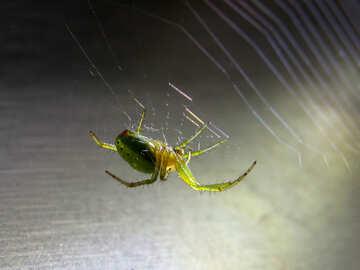Spider №27380