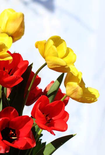 Spring flowers №27444