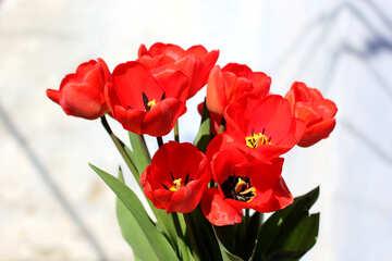 Fiori di primavera rosso №27450