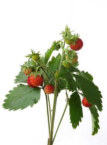 Strawberries on white background №27514