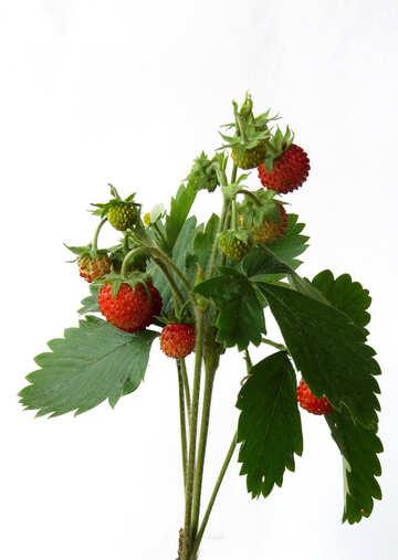 Strawberries on white background №27516