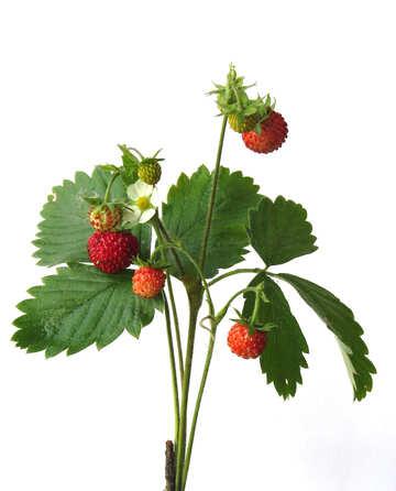 Strawberries on white background №27523