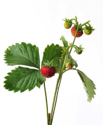 Strawberries on white background №27527