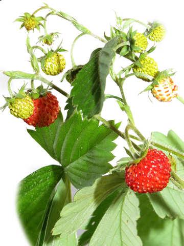 Strawberries on white background №27537