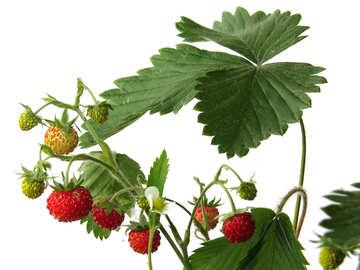 Strawberries on white background №27551