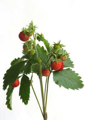 Lot of strawberries on white background №27515