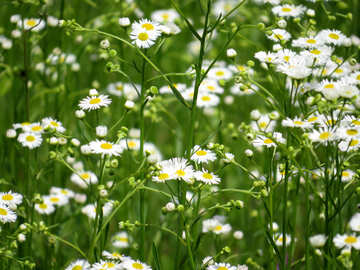 Beautiful prairie grass №27025