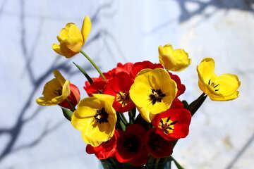 Spring has come №27422