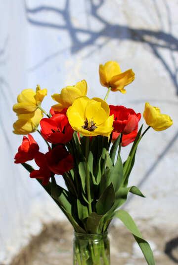 Букет тюльпанов в банке №27440