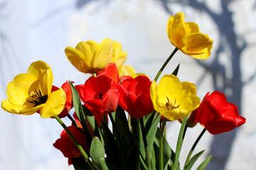 Blumen Tulpen №27434
