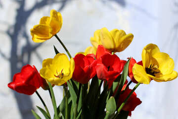 Real tulips №27435