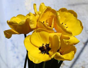 Frühling №27462