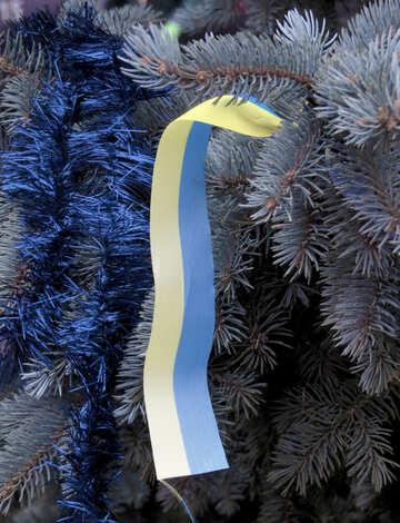 Ukrainian flag on the tree №27990