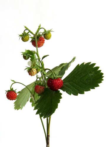 Strawberry on white background №27520