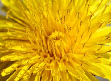 Big yellow flower №27105
