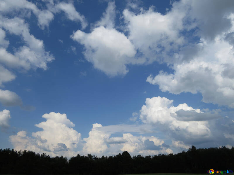 Blue Sky with clouds over the forest №27376
