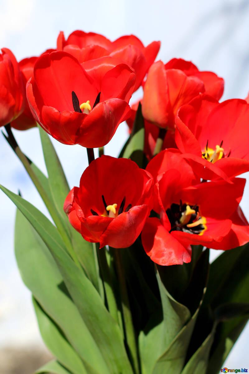 Roter Blumenstrauß №27452