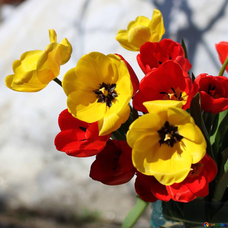 Bouquet of tulips №27419