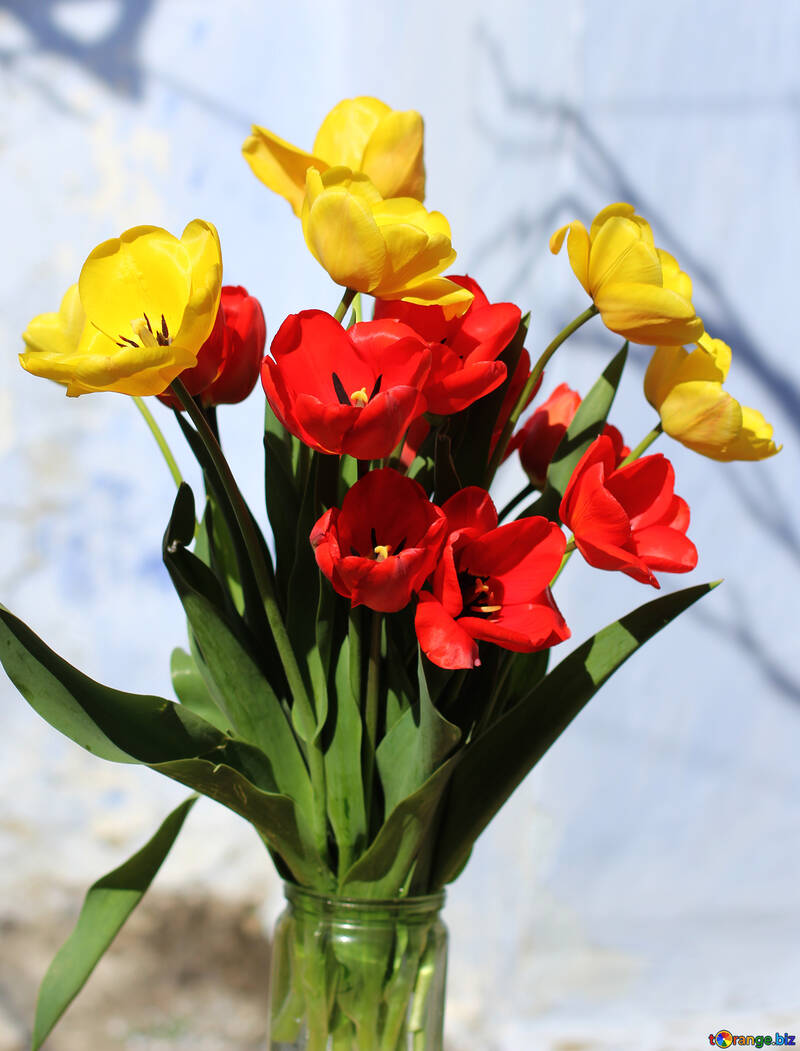 Bouquet of red and yellow tulips №27442