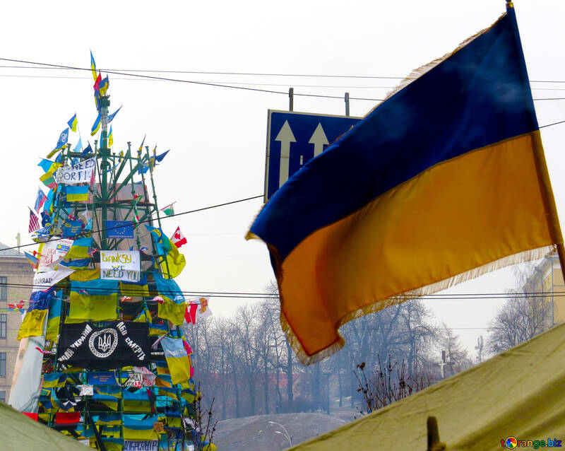 Tree decorated with flags of Ukraine №27910