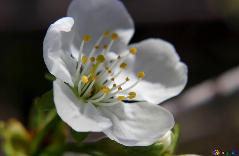 Вкусный цветок №27067