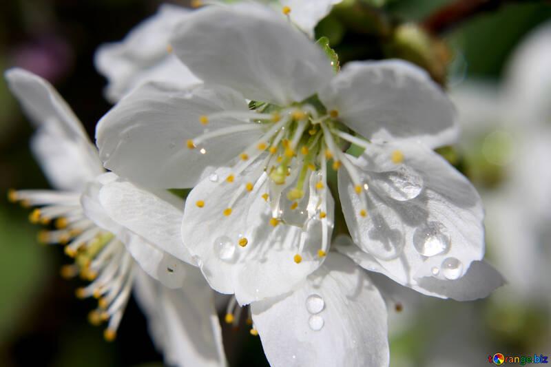 Весенний дождь №27071