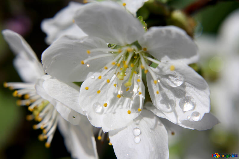 Spring rain №27071