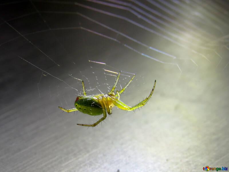 Green spider №27379