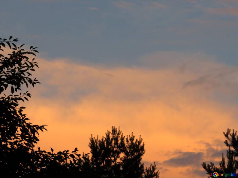 Puesta de sol sobre el bosque №27302